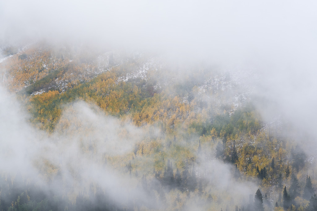Foggy Autumn Mountainside