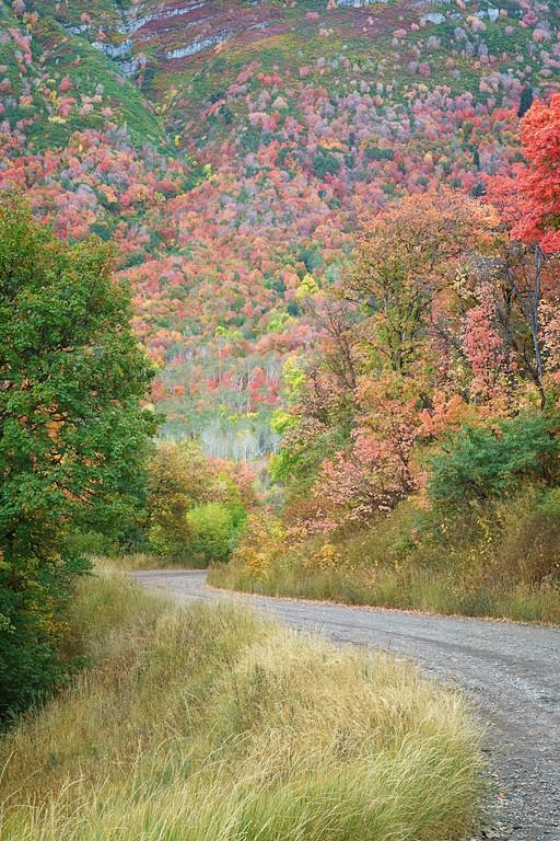 Cascade Mountain Road 02