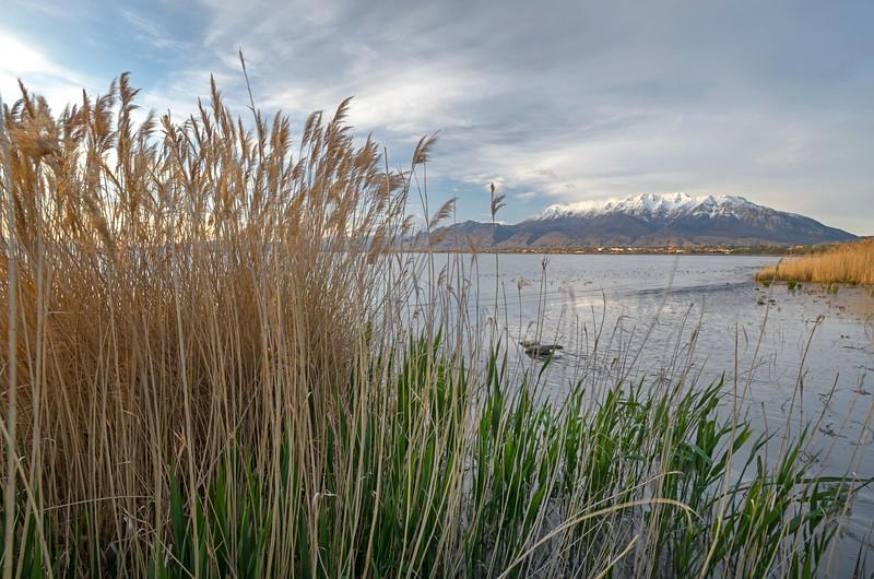 Timpanogos from Utah Lake State Park