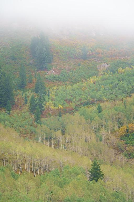 Misty Autumn Hillside