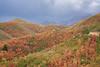Stormy Autumn Mountain View