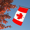 Canada Flag and Maple Tree