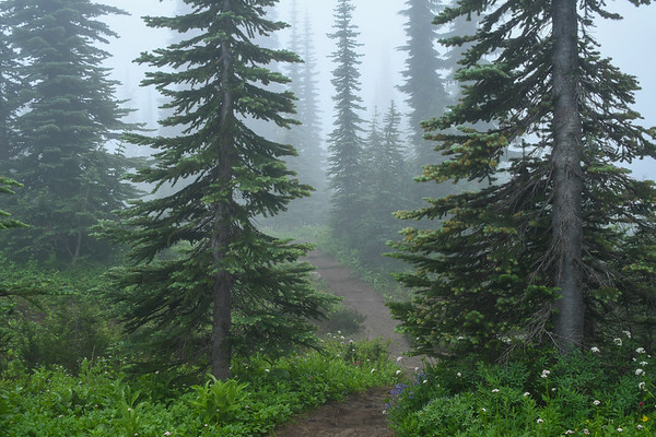 Faerie Land at Mt. Rainier III