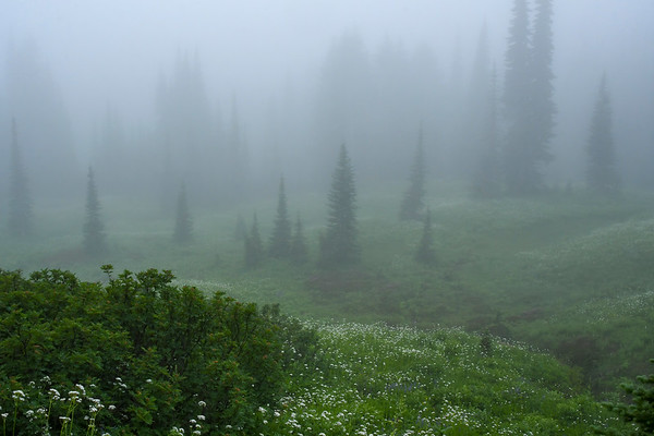 Faerie Land at Mt. Rainier II