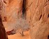 Tree Near Sand Dune Arch