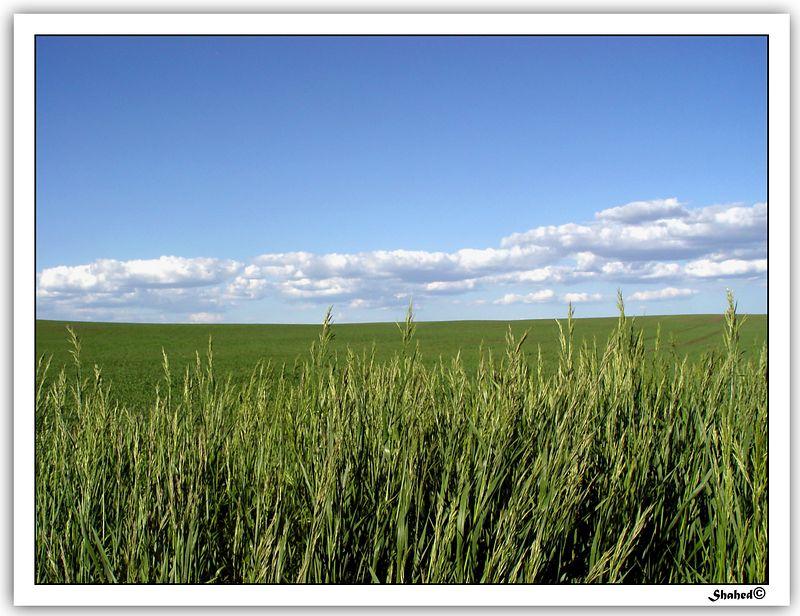 "Ref #8042-S <span id=""caption""><div class=""photocredit"">photo © LenScape Photography</div></span>"