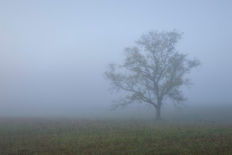 Foggy Morning - Cades Cove