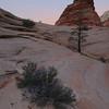 Little Tree, Zion N.P., UT