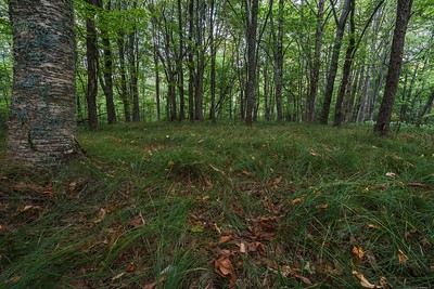 Glade on Grassy Ridge above the Middle Prong