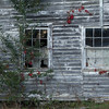 Windows near Piney Creek NC