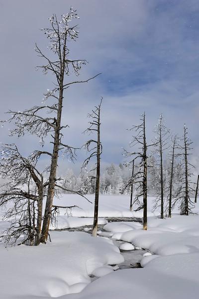 Petrified Trees, Fountain Paint Pot