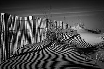 Dune Grass [Assateague, MD]