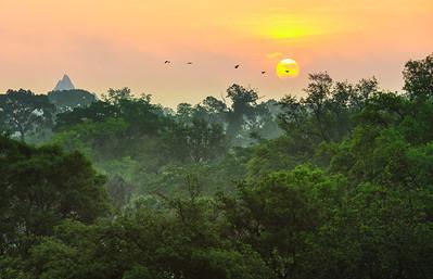 Sunrise over the Savanna