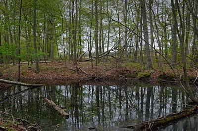 Vernal Pond, Arshamomaque Pond Preserve, Southold, NY