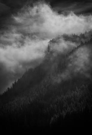Morning Fog [Icy Strait Point, AK]