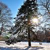 Bright sunshine just after snowfall @Parc Alfred Bertrand beside my Swiss Apartment @ Rue de Crespin , Geneva - Switzerland
