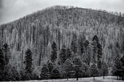Thompson Ridge