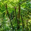 rainforest in the Caribbean