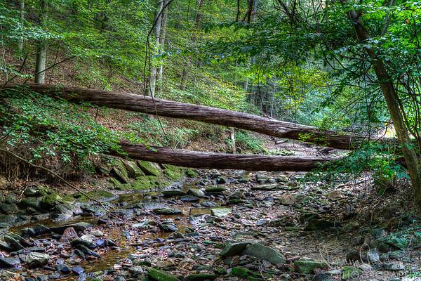 Tree Across Creek