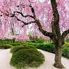 Spring Bloom - Japanese Garden