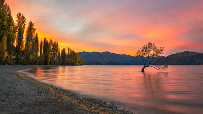 The Lonely Tree | New Zealand