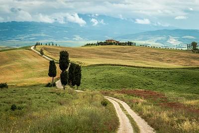 Elysian Fields | Tuscany, Italy