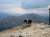 View Down Loch Long