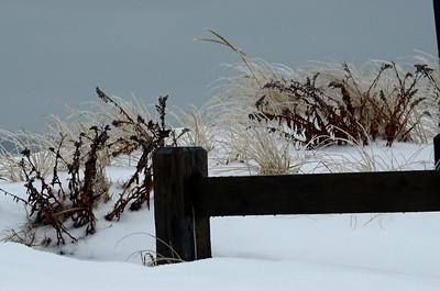 Frozen Grasses at New Suffolk Beach, NY