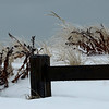 Frozen Grasses at New Suffolk Beach, NY