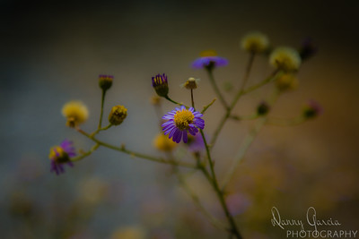 Small Purple and Yellow Flower