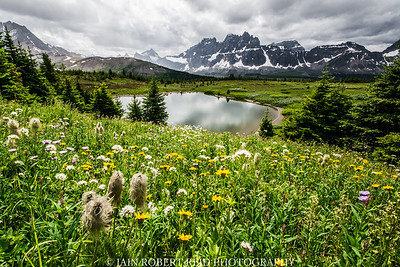 Majestic Meadows