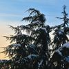 Snowfall @Parc Alfred Bertrand beside my Swiss Apartment @ Rue de Crespin , Geneva - Switzerland