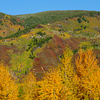 Aspen Fall color in mountain - Colorado, USA