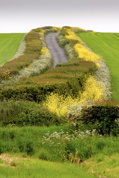 Section A - Print - Highly Commended - Spring Hedges by Cathy Warne