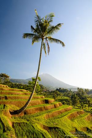 Rice terraces Jatiluwih