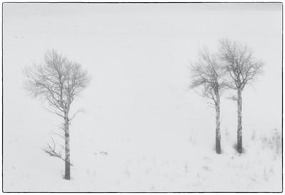 Snow Storm Lamar Valley