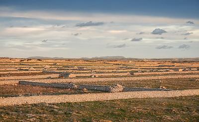 Stone fields