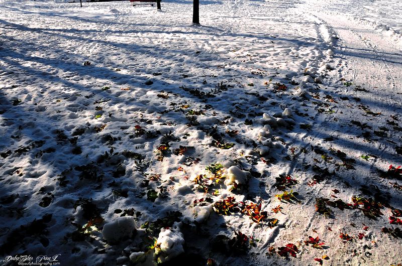 Bright sunshine just after snowfall @Parc Alfred Bertrand beside my Swiss Apartment @ Rue de Crespin , Geneva - Switzerland