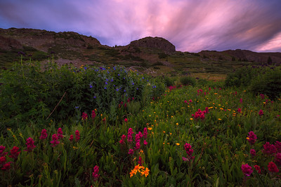 Calm Wildflowers After Rain