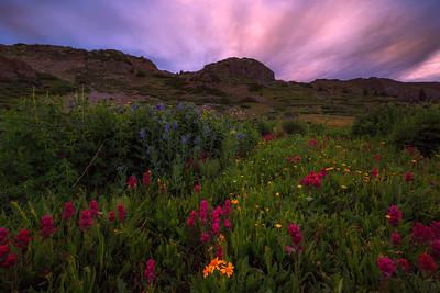 Calm Wildflowers After Rain