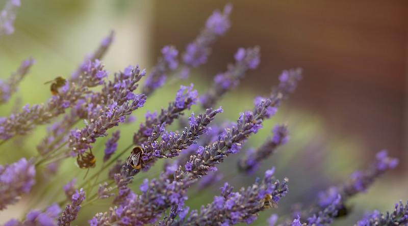 Bees favorite