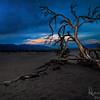 Dead Tree on Sand Dunes