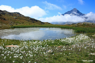 Lake & Flowers, Vanoise, Savoie, France