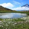 Lake & Flowers, Vanoise, Savoie, France