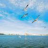 Way to Shell Island - Florida, ,USA