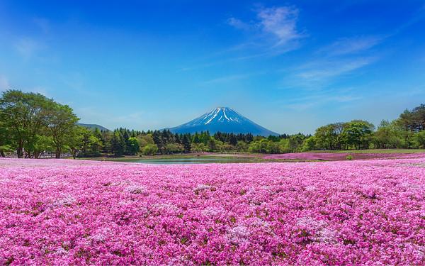 Mount Fuji #02