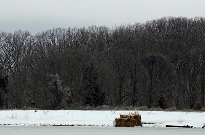 Duck Blind on Snowy West Creek, Cutchogue, NY