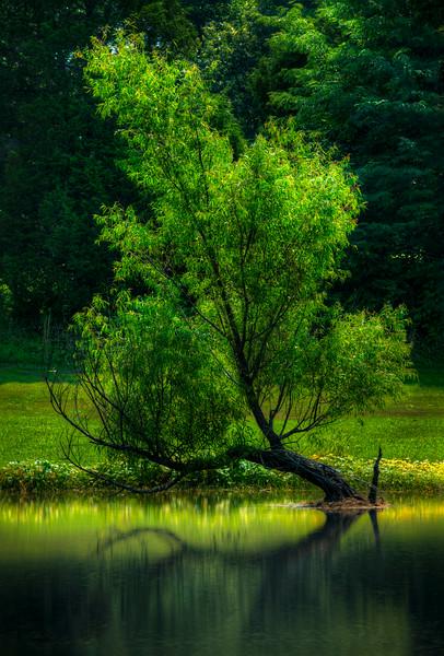 Painters Tree