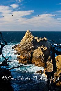 Point Lobos State Natural Reserve, Monterey, CA