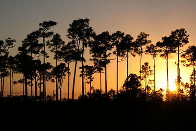 Everglades National Park, FL